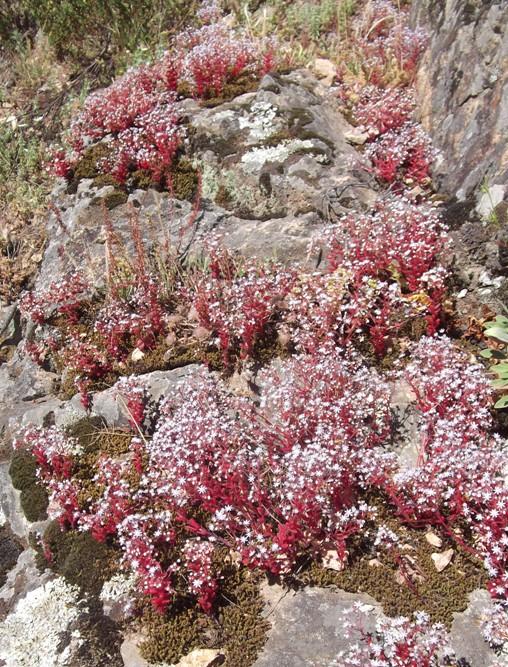 blooming ephemera, west coast